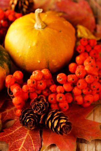 BLOG- fall holiday